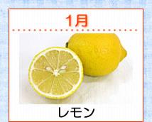 1月 レモン酵素